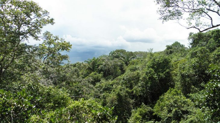 Image for Major rise in deforestation of Colombian Amazon in 2020